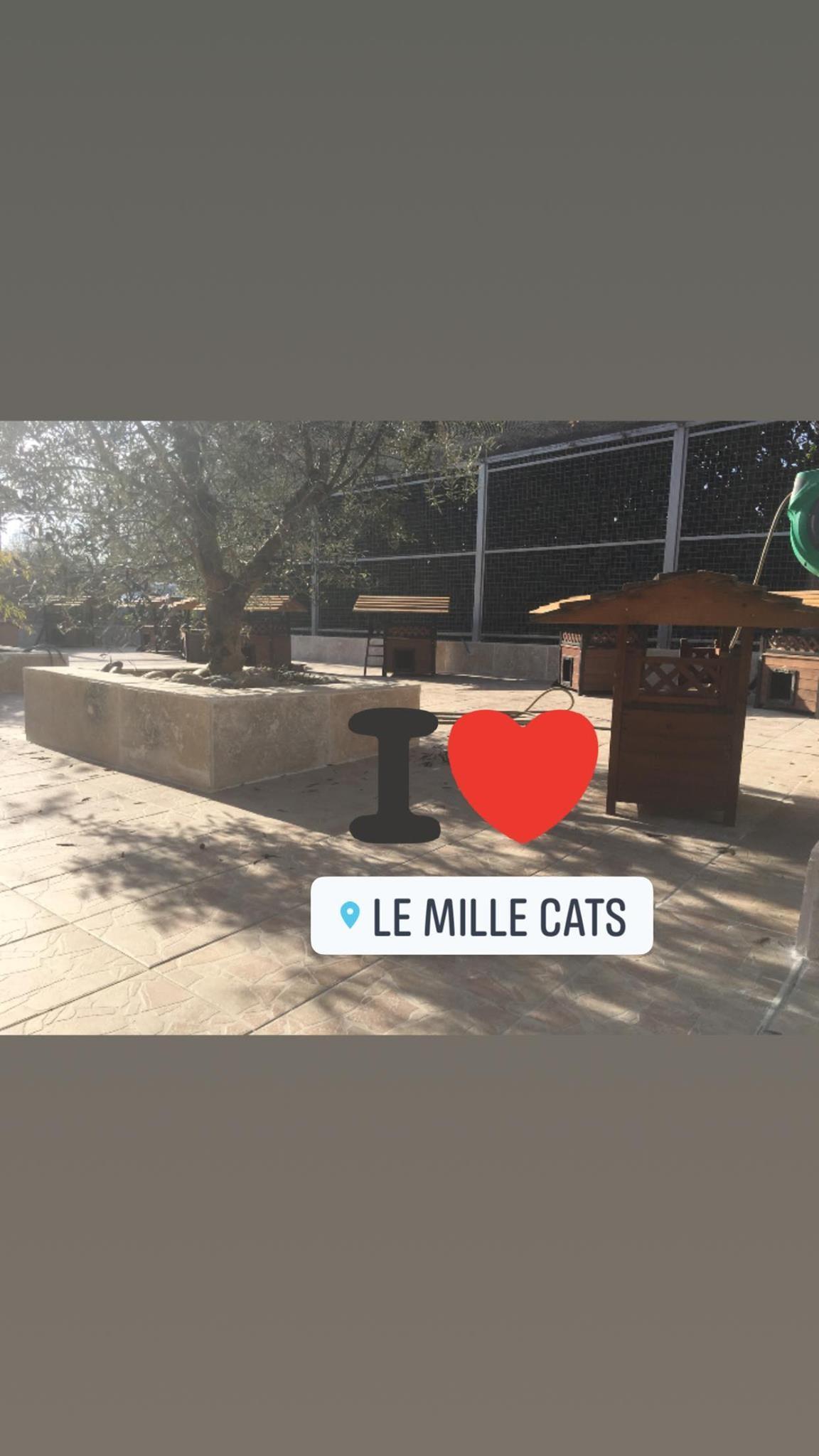 Millecats 2020 2